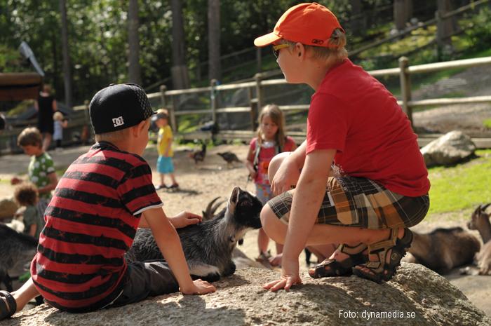 djurpark1